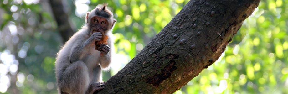 Affenwälder auf Bali