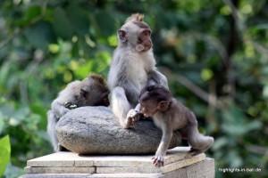 Affenkinder