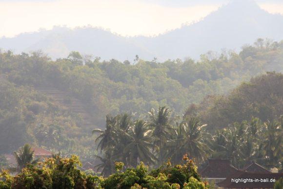 Dschungel in Bali