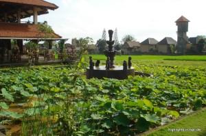 Brunnen und Retaurant am Reisfeld